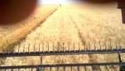 2012 Winter Wheat